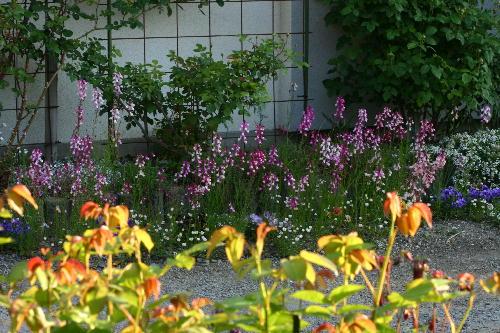 入り口付近の草花