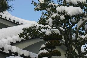2月9日 雪