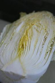 最終の白菜収穫