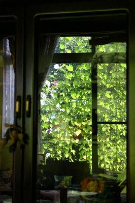 緑のカーテン 映り込み