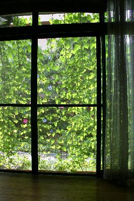 緑のカーテン 室内から