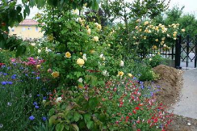 2008.5月の庭