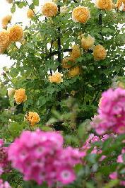 2008.5月の庭 1