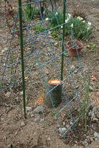 サクランボ伐採