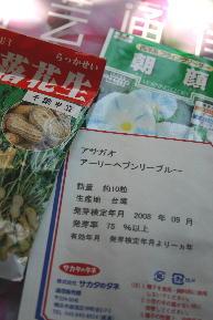緑のカーテン・朝顔種まき