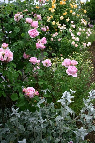 5/23雨降る今朝の庭