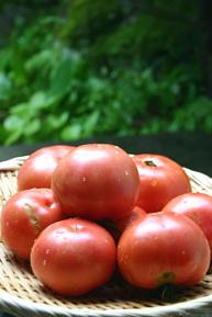 麗夏 大玉トマト
