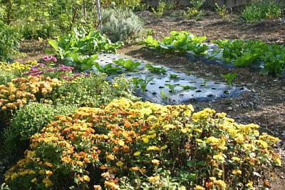 庭先の野菜