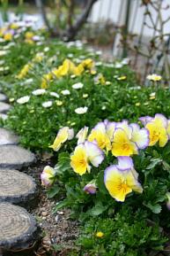 庭の草花3