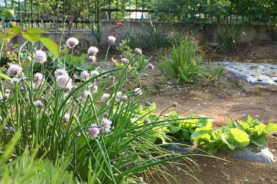 菜園様子1