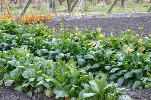 野菜畑の様子