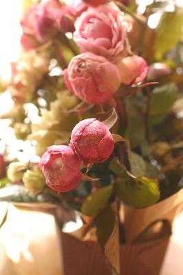 I1月のバラ 3